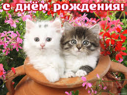 с днём рождения котята