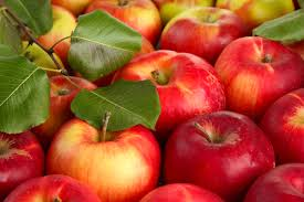 август яблоки